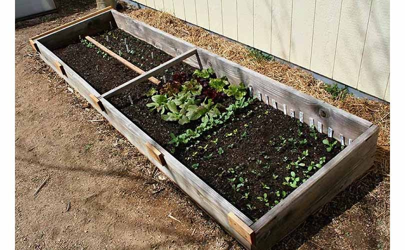 cold frames for winter gardening