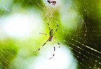 Learning to coexist with bugs and spiders will benefit your garden.
