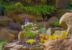 Flowers in a garden rockery in spring