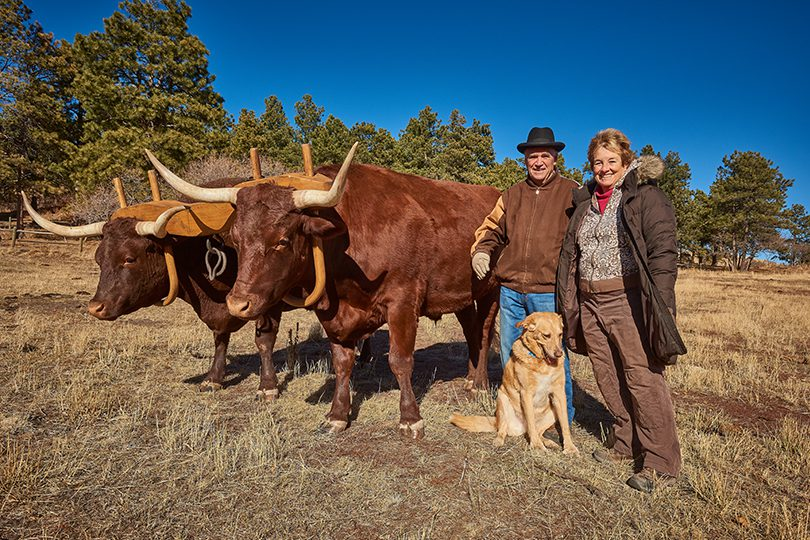 Rollie and Paula Johnson of Larkspur stand with one pair of oxen. Dandy (named for Martha Dandridge Custis Washington) and Davey (named for Dwight David Eisenhower).