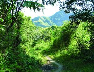 A lovely lush valley in Madagascar where the vanilla bean grows