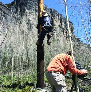 Cameraman, Jay Kriss, captures lineman KJ Johnson climbing a pole the way it was done in the early years of the industry.