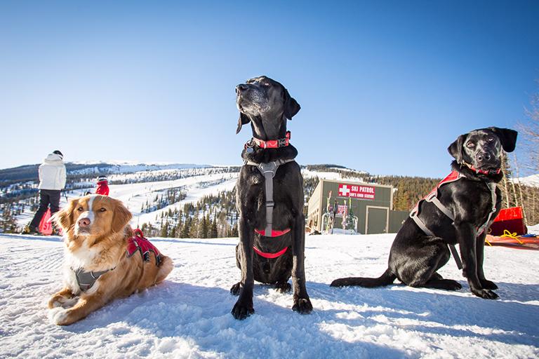 buy online caf44 20ff5 Doggone Heroes: Colorado's Avalanche Dogs   Colorado Country ...