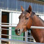 Free Horse Expo