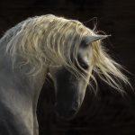 Noel Night: Equine Photographer Tony Stromberg