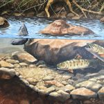 About the Trout of Bear Creek