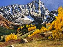 artist's painting of an elk in the Rocky Mountains