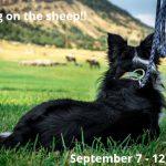 Meeker Classic Sheepdog Championship Trials