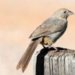 AVAS Bird Walk